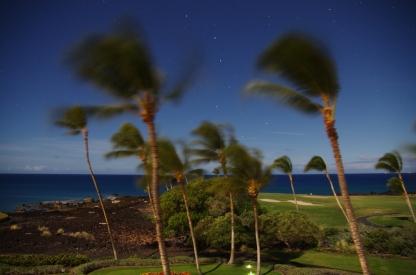 Palms-Hawaii