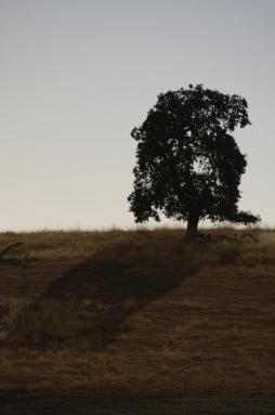 The-Dish-Tree