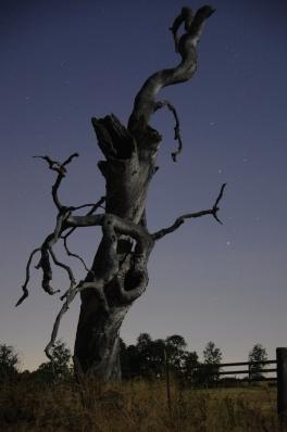 Tree-Stump-Alpine