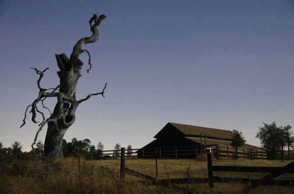 Tree_and_barn